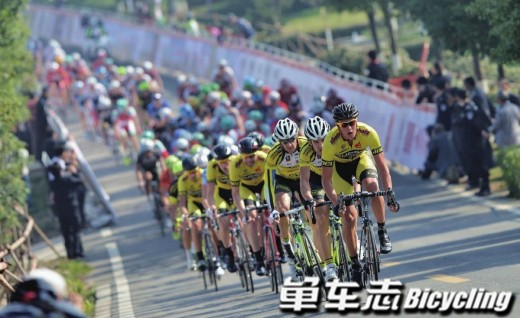 看懂UCI赛事——公路车篇(上)!